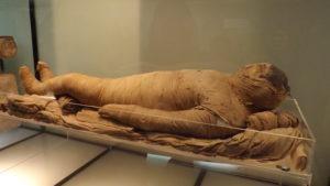 Teca Protettiva Museo Egizio